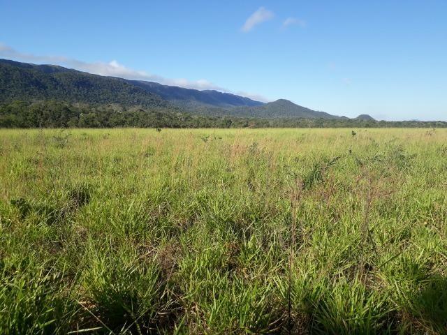 Fazenda com 784,77 hectares entre Jangada e Rosário Oeste - Foto 16