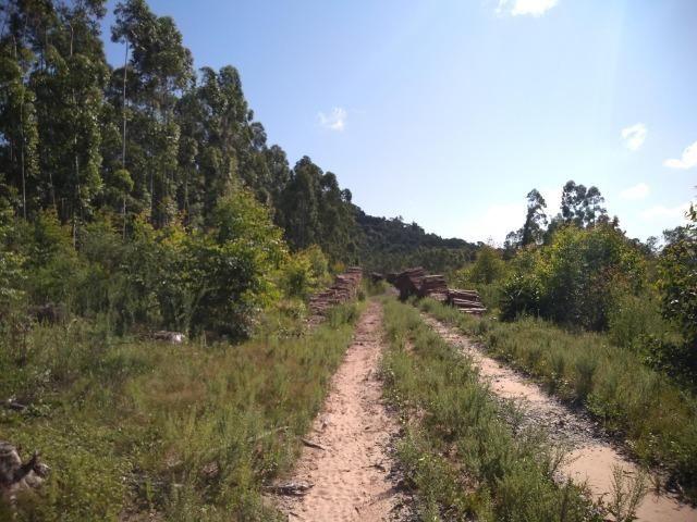 Chácara na localidade de Paquete - Capela de Santana - Foto 4