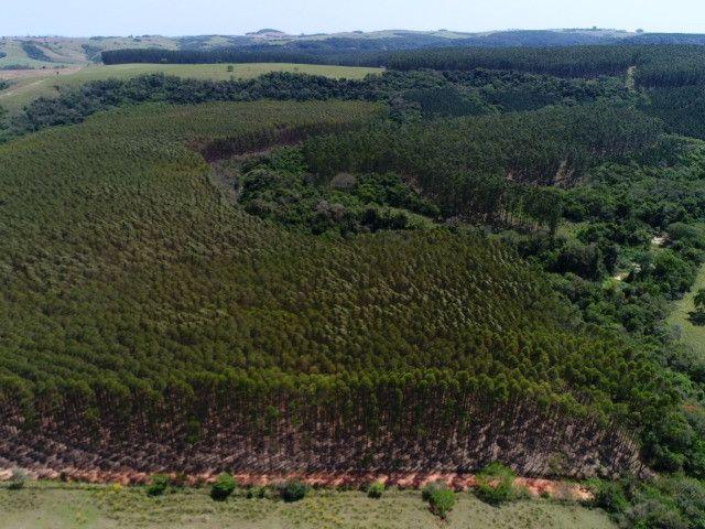 Área com eucalipto - 34,3907ha plantado (14 alqueires)- Itararé/SP - Foto 8