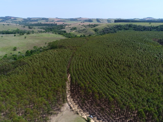 Área com eucalipto - 34,3907ha plantado (14 alqueires)- Itararé/SP - Foto 6