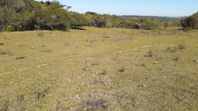 R- 394 Vendo Belíssima propriedade de 50 hectares próximo a Pedro Osório - Foto 6