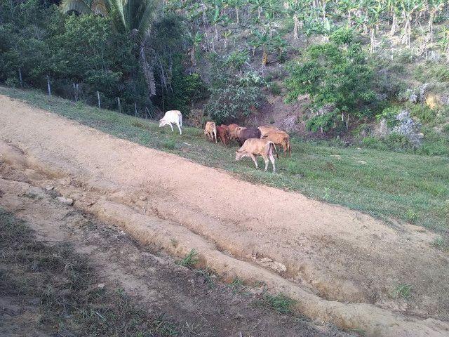 Vendo excelente fazenda Presidente tranquedo Neves  - Foto 2