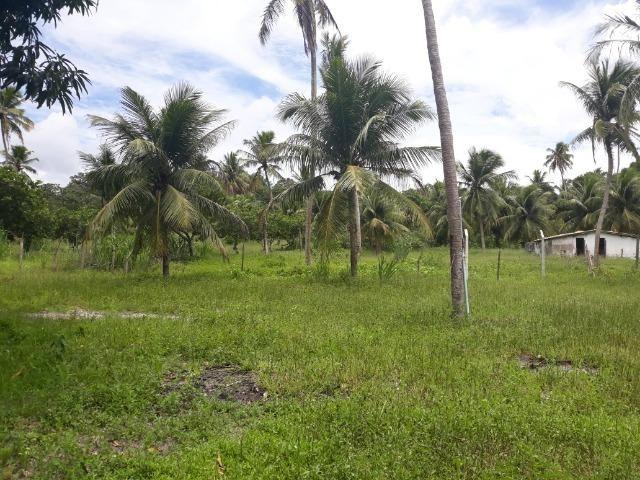 Oportunidade de Chácara, com 5,2 ha, há margem da RN 316, em Monte Alegre/RN - Foto 4