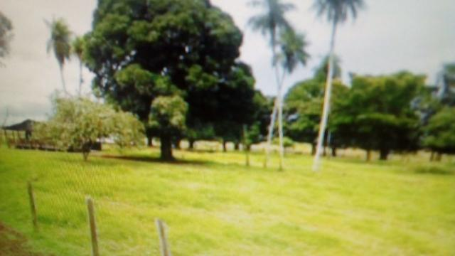 Fazenda de 87.945 hectares, em pocone no pantanal Mato-Grossense ! - Foto 11