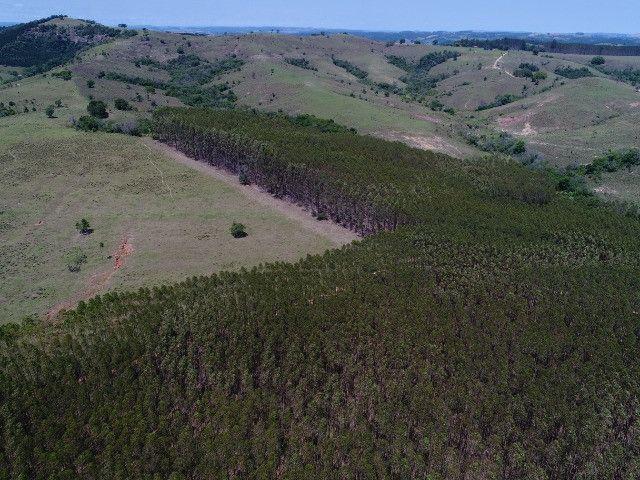 Área com eucalipto - 34,3907ha plantado (14 alqueires)- Itararé/SP - Foto 10