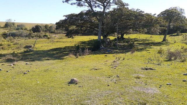 R- 394 Vendo Belíssima propriedade de 50 hectares próximo a Pedro Osório - Foto 20