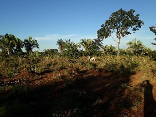 Chácara com 38.2 Hect em Acorizal - Foto 11