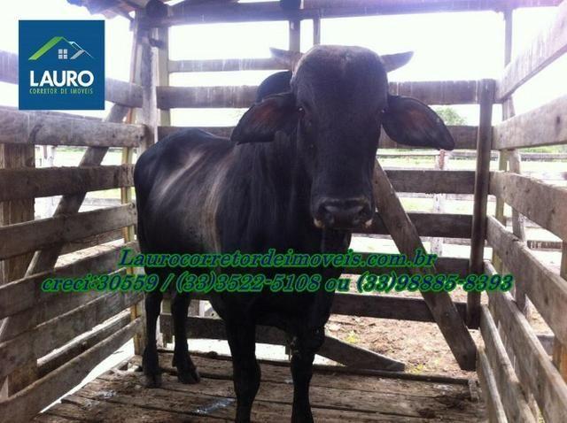 Fazenda com 9.800 hectares em Montalvânia MG - Foto 5