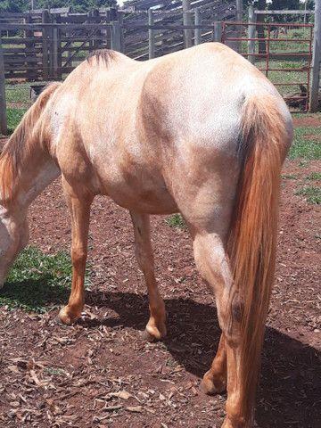 2 animais 1 egua e 1 cavalo  - Foto 2