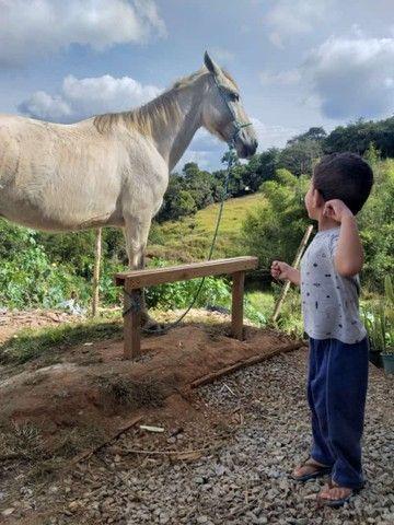 Cavalo castrado - Foto 2
