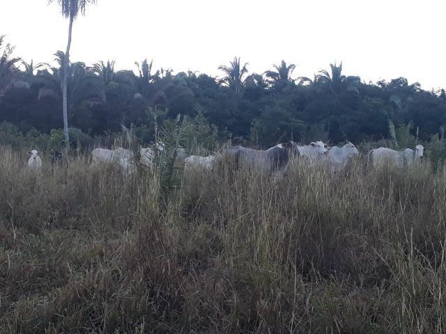 Chácara com 38.2 Hect em Acorizal - Foto 2