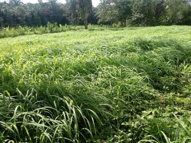 Fazenda com 784,77 hectares entre Jangada e Rosário Oeste