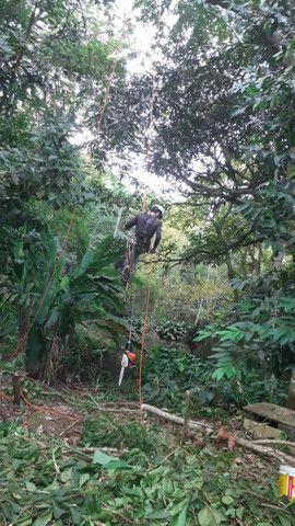 Poda e corte de árvores de alto risco  - Foto 6