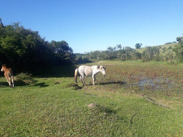 Vende-se uma égua domada e três potras  - Foto 5