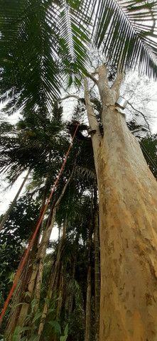 Poda e corte de árvores de alto risco  - Foto 2