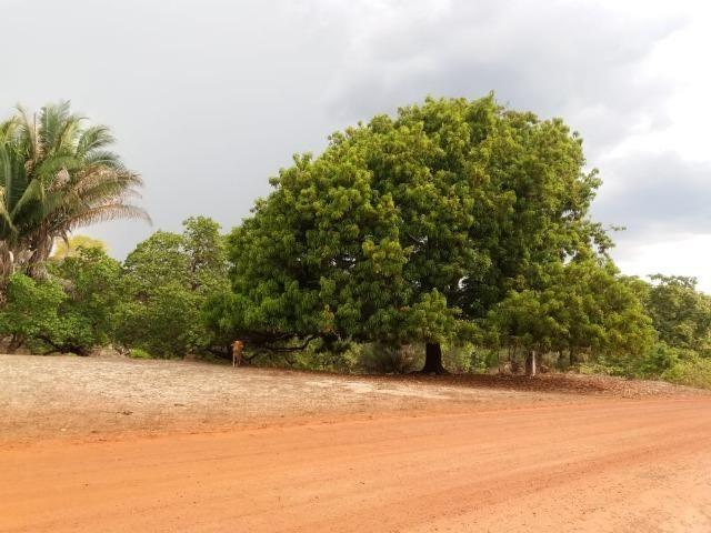 Vendo terreno de 13 hectares a 100Km de Parnaiba-PI - Foto 3