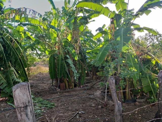 Vende-se uma fazenda - Foto 9