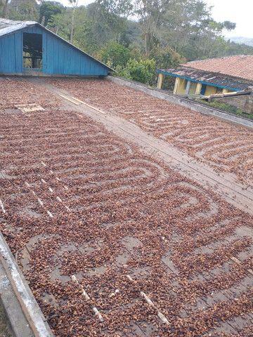 Fazenda  área 100 ha  lavoura maior parte de cacau,  Casa 4/4  escriturada - Foto 10