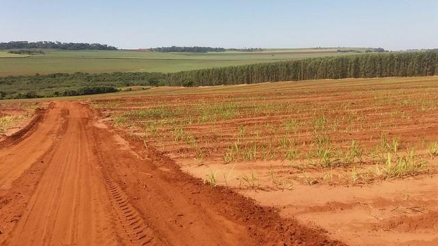 Fazenda 41 alqueires em Brodowisk 4.300.000.00 - Foto 8