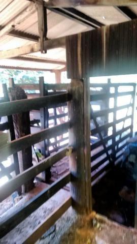 FAZENDA COM 1247 HECTARES / 800 hectares em pastagem abertas - Foto 3