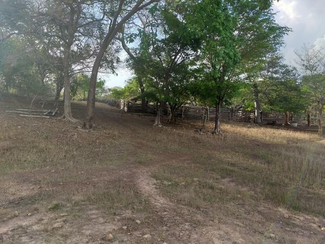 Vende-se uma fazenda - Foto 5