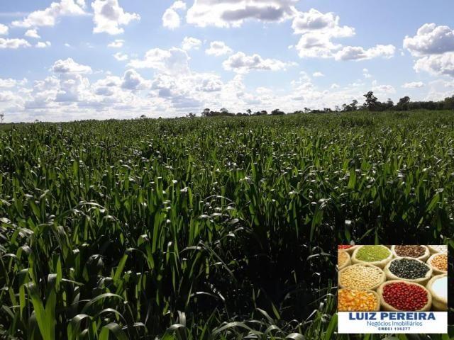 FAZENDA A VENDA DE 292 ALQUEIRÕES EM TALISMÃ - TO (Dupla Aptidão) - Foto 8