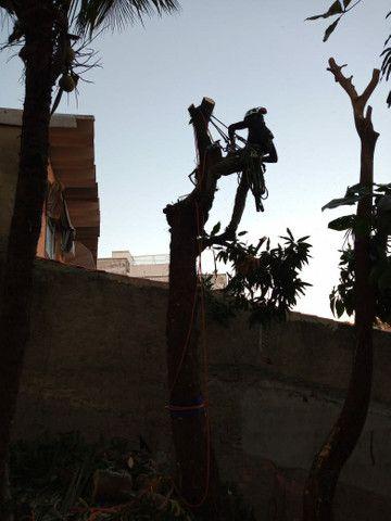 Poda e corte de árvores de alto risco  - Foto 5