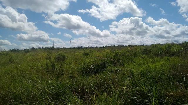 FAZENDA COM 1247 HECTARES / 800 hectares em pastagem abertas