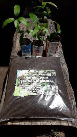 Vende se húmus adubo para plantar