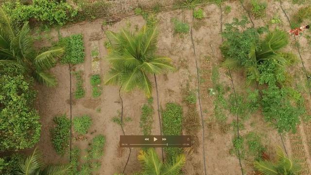 Fazenda 42 tarefas linha verde - Foto 12
