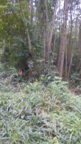 Vendo chacara 10 hectares - Foto 3