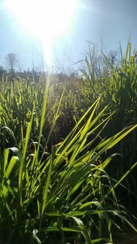 FAZENDA COM 1247 HECTARES / 800 hectares em pastagem abertas - Foto 2