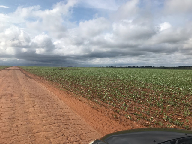 Arrendamento fazenda pronta  - Foto 2