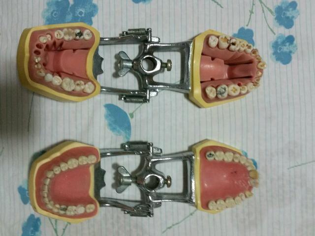 Manequim Odontologico