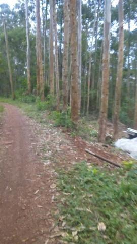 Vendo chacara 10 hectares - Foto 2