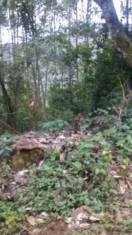 Vendo chacara 10 hectares - Foto 8