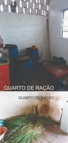 Sitio, Chácara - Foto 10