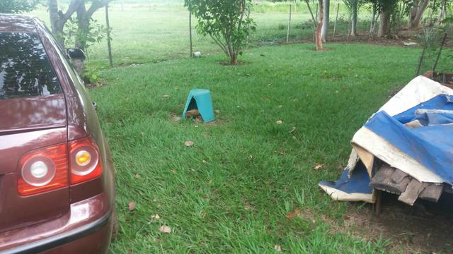 Chacara 2 hectares lazer - Foto 2