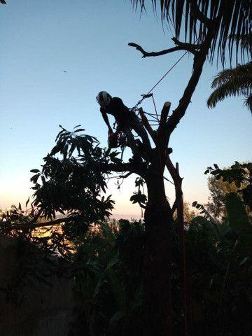 Poda e corte de árvores de alto risco