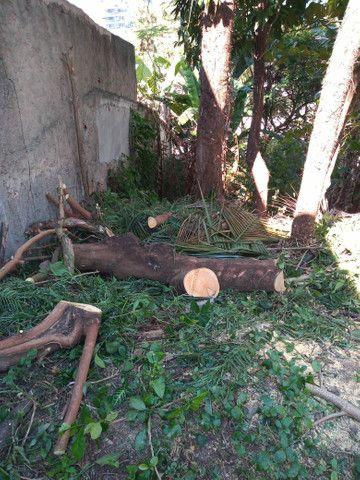 Poda e corte de árvores de alto risco  - Foto 4
