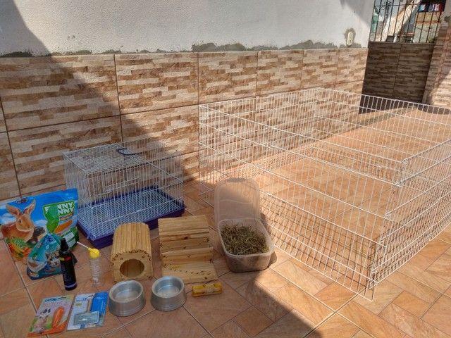 Acessórios para mini coelhos e roedores em geral - Foto 2