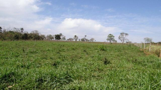 Fazenda de 308 hectares em Dourados/MS