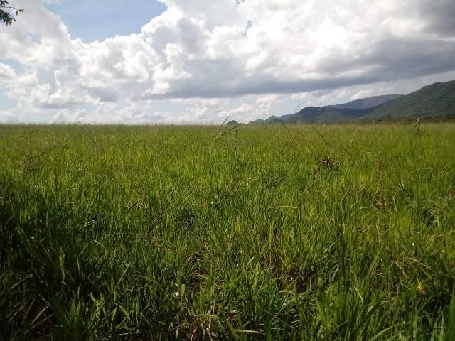 Fazenda Rosario Oeste 50 km fora asfalto 782 ha R$ 3 mi - Foto 7