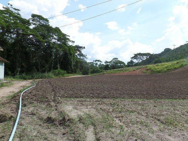 154 - Área de terra em Providência - Foto 2