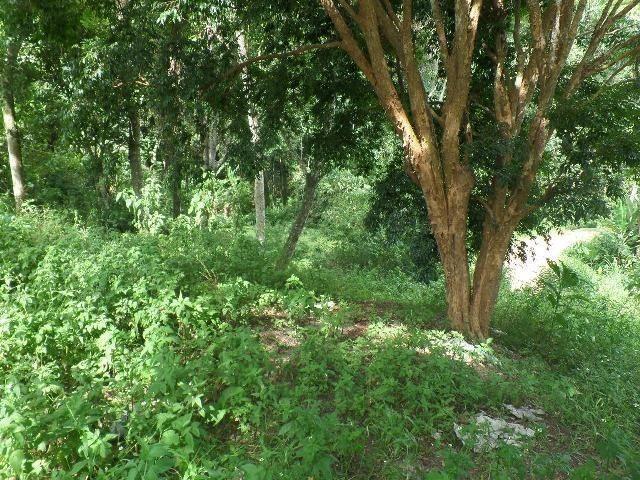 154 - Área de terra em Providência - Foto 5