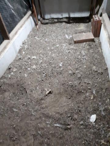 Esterco de GALINHAS ( cama de galinha) - Foto 3