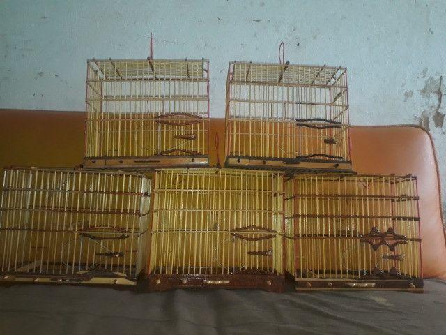 gaiolas preseiras - Foto 5