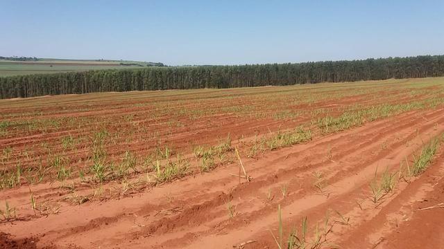 Fazenda 41 alqueires em Brodowisk 4.300.000.00 - Foto 10