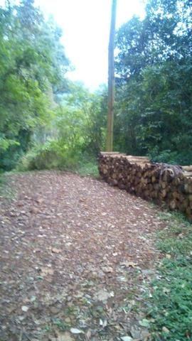 Vendo chacara 10 hectares - Foto 4