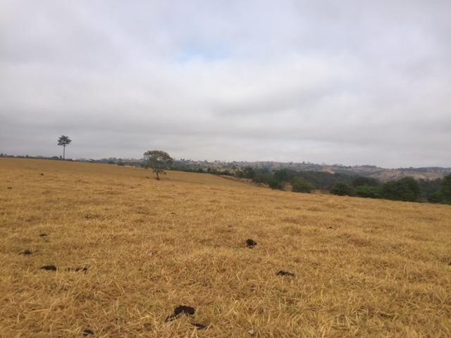 Fazenda 20 - Foto 2